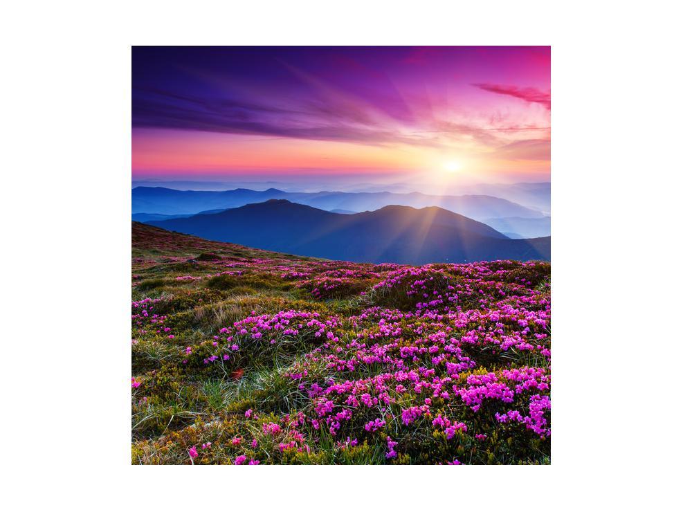 Slika planinskog rascvijetalog krajolika (K011322K4040)