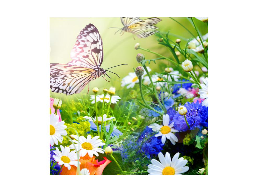 Slika poletnih cvetov z metuljem (K012220K4040)