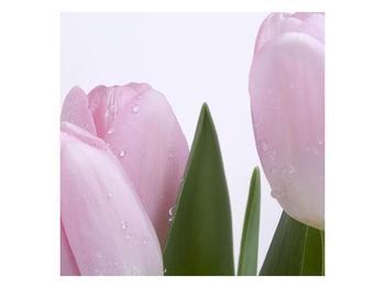Obraz růžových tulipánů (F000389F4040)