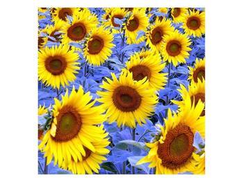 Obraz slunečnic (F000619F4040)