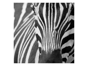 Obraz černobílého detailu zebry (F000715F4040)
