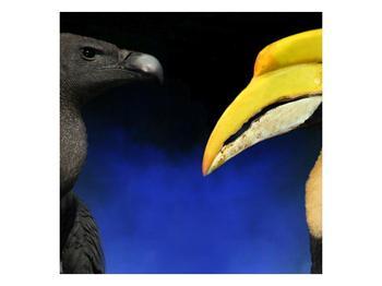 Obraz ptačích zobáku (F001358F4040)