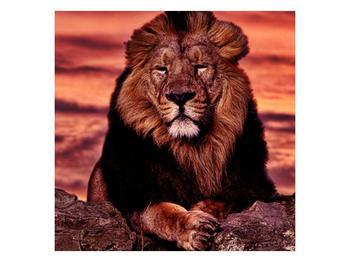 Obraz krále zvířat (F001507F4040)