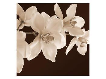 Krásný obraz bílých květin (F001888F4040)