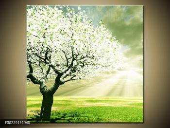 Obraz stromu na jaře (F002291F4040)