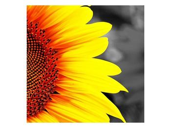 Obraz květu slunečnice (F002400F4040)