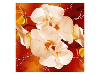 Obraz bílých orchidejí (F005694F4040)