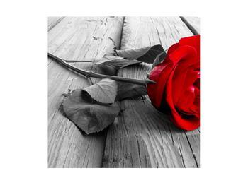 Obraz rudé růže (K011138K4040)