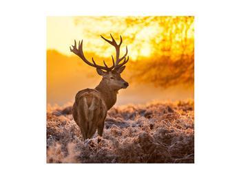 Obraz jeleňa (K011281K4040)