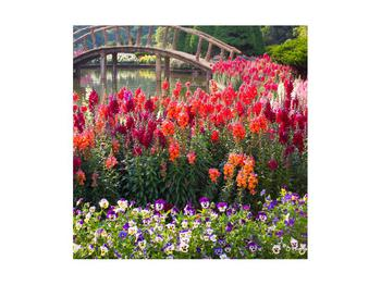 Obraz kvetín (K012048K4040)