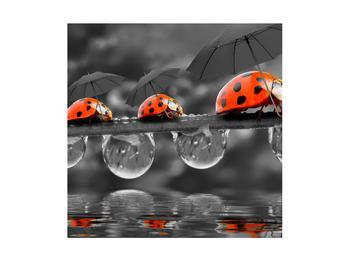 Obraz lienok sedembodkových s dáždnikmi (K012059K4040)