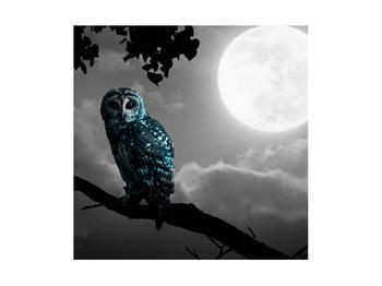 Tablou cu bufnița nocturnă (K012185K4040)