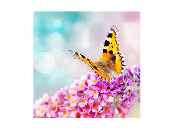 Obraz motýla na květech (K012351K4040)
