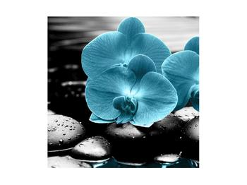 Obraz modrých květů orchideje (K012398K4040)