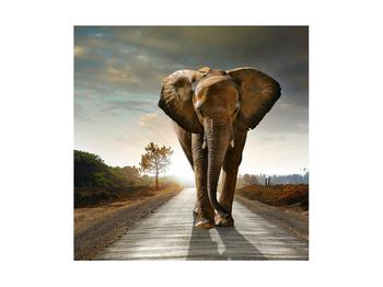 Tablou cu elefant (K012479K4040)