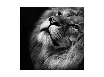 Černobílý obraz lva (K012767K4040)