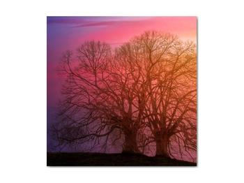 Obraz stromov v hmle (V020088V4040)