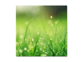 Obraz - rosa na tráve (V020169V4040)