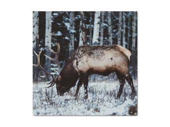 Obraz - jeleň v zime (V020179V4040)
