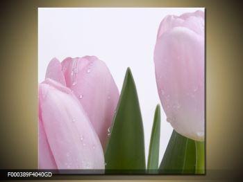 Obraz růžových tulipánů (F000389F4040GD)