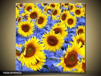 Obraz slunečnic (F000619F4040GD)
