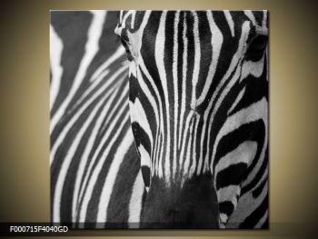 Obraz černobílého detailu zebry (F000715F4040GD)