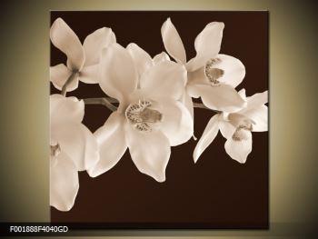Krásný obraz bílých květin (F001888F4040GD)