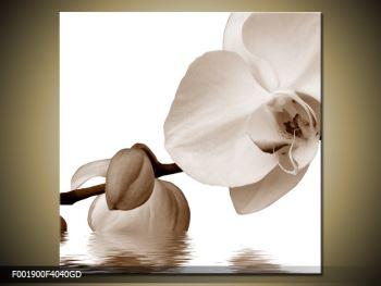 Krásný obraz bílé orchideje (F001900F4040GD)