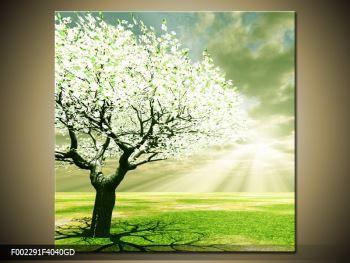 Obraz stromu na jaře (F002291F4040GD)