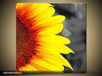 Obraz květu slunečnice (F002400F4040GD)