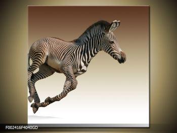 Obraz běžící zebry (F002416F4040GD)