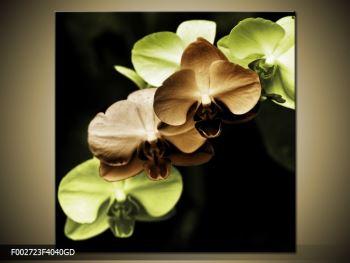 Obraz hnědých a zelených orchideí  (F002723F4040GD)