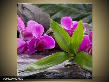 Obraz fialových orchidejí s listím (F004027F4040GD)