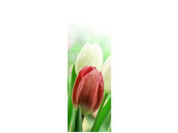 Fotoroleta R012181R50150 (R012181R50150)