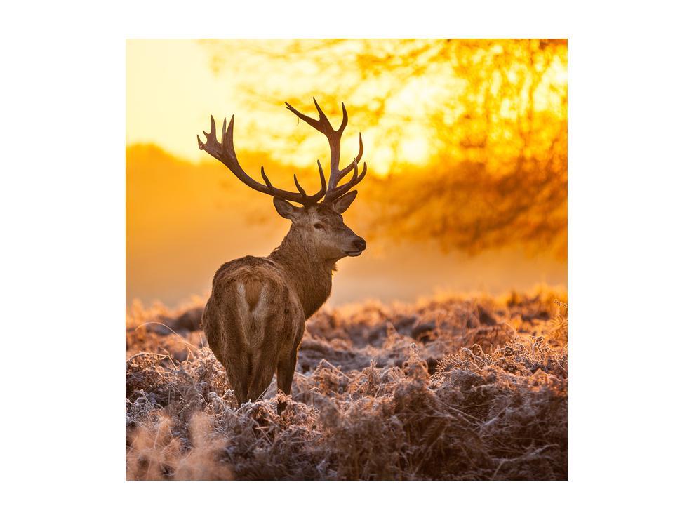 Slika jelena (K011281K5050)