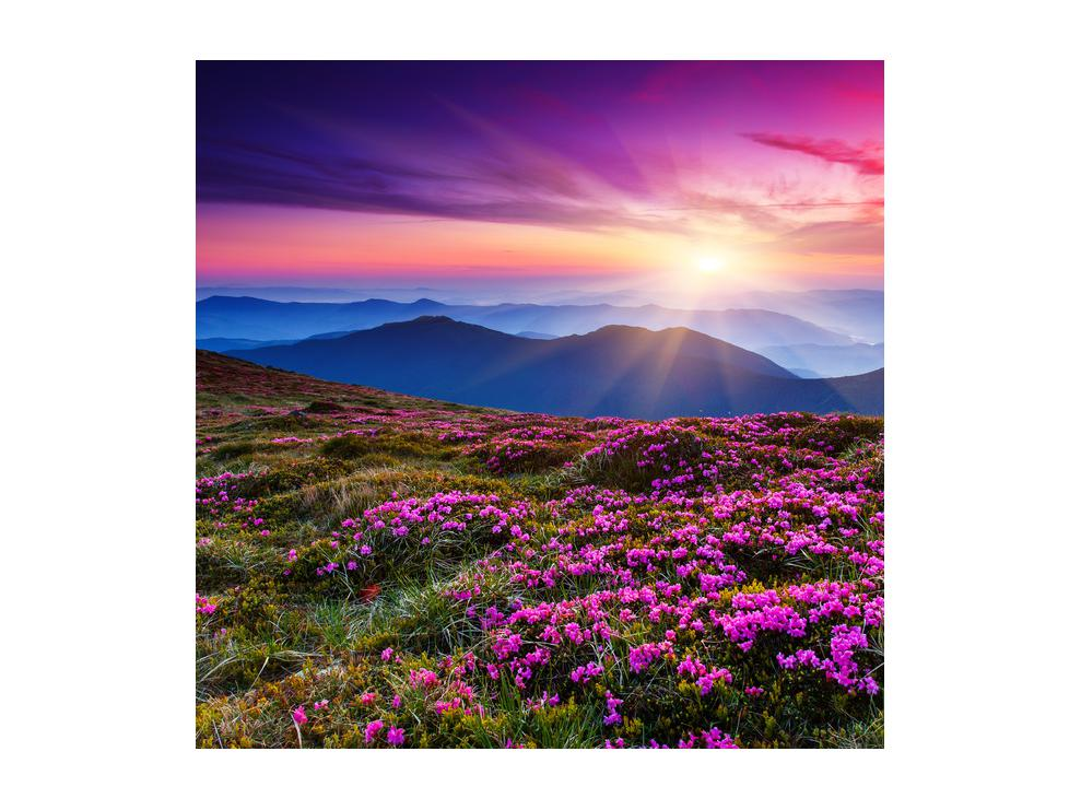 Slika planinskog rascvijetalog krajolika (K011322K5050)
