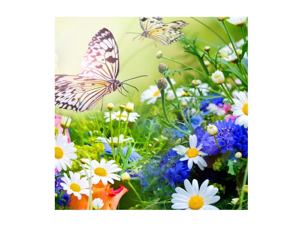Slika poletnih cvetov z metuljem (K012220K5050)