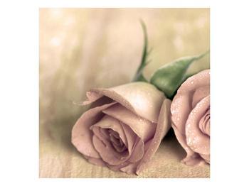 Obraz jemných růží (F001212F5050)