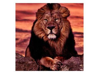 Obraz krále zvířat (F001507F5050)