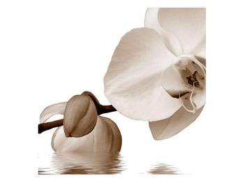 Krásný obraz bílé orchideje (F001900F5050)