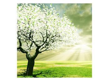 Obraz stromu na jaře (F002291F5050)