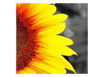 Obraz květu slunečnice (F002400F5050)