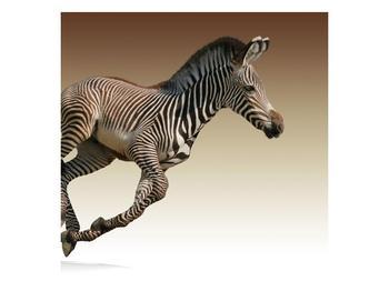 Obraz běžící zebry (F002416F5050)
