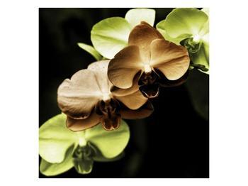 Obraz hnědých a zelených orchideí  (F002723F5050)