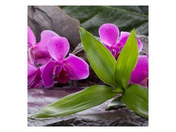 Obraz fialových orchidejí s listím (F004027F5050)