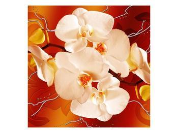 Obraz bílých orchidejí (F005694F5050)