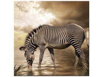 Obraz zebry (K011110K5050)