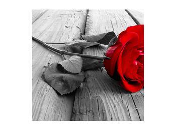 Obraz rudé růže (K011138K5050)