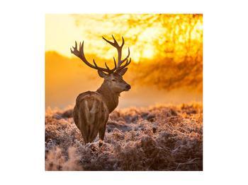 Obraz jelena (K011281K5050)