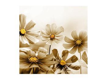 Obraz květů (K011484K5050)